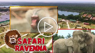 frame-safari-ravenna